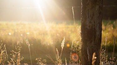 grounding meditation ecourse tree