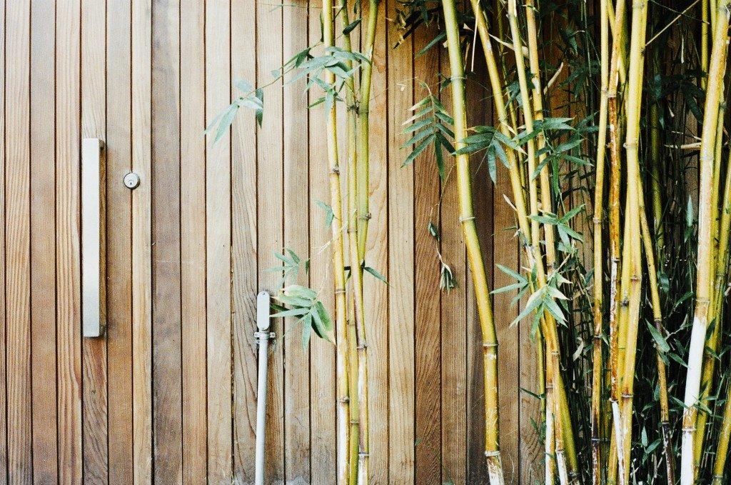 Bamboo_Class2_ExploringMeditation