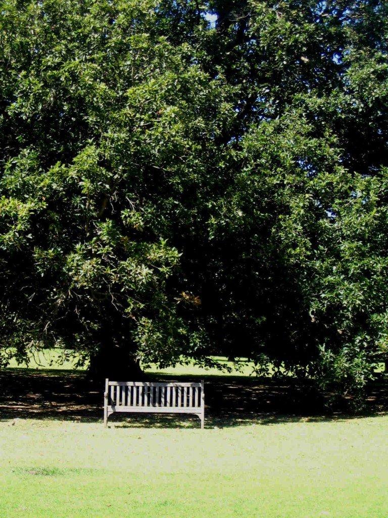 Seat_Under_Tree_QuietMind