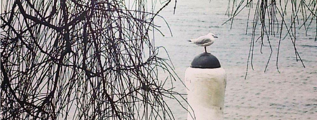 seagull seaside meditation