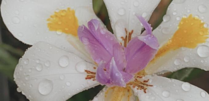Garden Flower Spring Rain